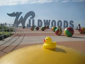 duckwildwood1