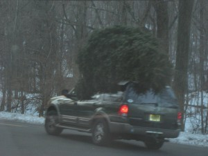 christmas-tree-eats-car