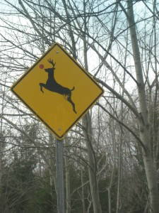 Deer Crossing Sign with Red Nose
